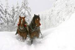 vinter Royaltyfri Fotografi