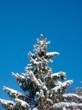 vinter arkivfoto