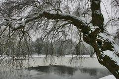 Vinter 29 royaltyfri fotografi