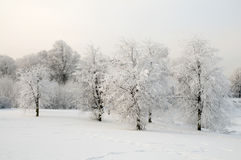 Vinter Royaltyfri Bild