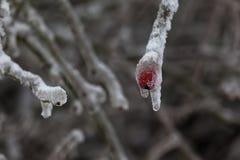 Vinter 21 Royaltyfri Fotografi