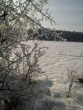 Vinter Royaltyfri Bild
