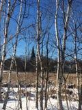 Vinter in Royaltyfria Foton