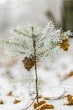 Vinter bakgrund, jul, skog, landskap, natur, snö Royaltyfria Foton