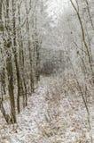 Vinter bakgrund, jul, skog, landskap, natur, snö Fotografering för Bildbyråer