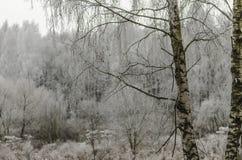 Vinter bakgrund, jul, skog, landskap, natur, snö Royaltyfri Foto