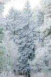 Vinter bakgrund, jul, skog, landskap, natur, snö Arkivfoton