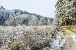 Vinter bakgrund, jul, skog, landskap, natur, snö Royaltyfri Fotografi