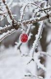 Vinter Berry Frozen och täckt med snö royaltyfri foto