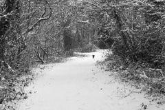 Vinter dag Royaltyfria Bilder
