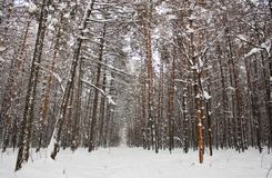vinter för 01 park Royaltyfria Bilder