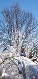 vinter för blå sky royaltyfria foton