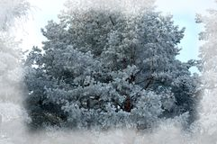 vinter för blåa snowflakes för bakgrund vit nytt år för bakgrundsjul Vinterför Royaltyfri Fotografi