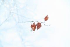 vinter för blåa snowflakes för bakgrund vit Royaltyfri Fotografi