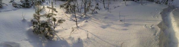 vinter för blåa snowflakes för bakgrund vit Dag för vinter för vinterskog solig Banan i ett panorama- foto för pinjeskog Fotografering för Bildbyråer