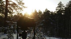 vinter för blåa snowflakes för bakgrund vit Dag för vinter för vinterskog solig Kameran är i skogen Arkivfoto
