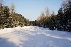 vinter för blåa snowflakes för bakgrund vit Dag för vinter för vinterskog solig skogen sörjer vägen Arkivfoton