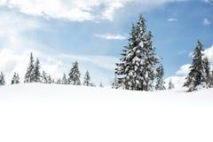vinter för blommasnowtid Royaltyfri Foto