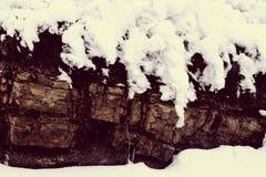 vinter för blommasnowtid royaltyfria bilder