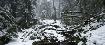 vinter för dal för snow för dimmaskog scenisk Fotografering för Bildbyråer