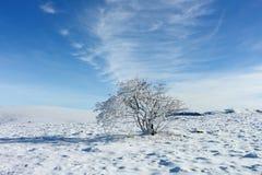 vinter för designbildtree fotografering för bildbyråer