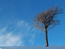 vinter för designbildtree Royaltyfri Foto