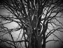 vinter för designbildtree Royaltyfri Bild