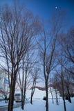 vinter för designbildtree arkivbild