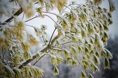 vinter för designbildtree Arkivfoton