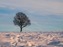 vinter för designbildtree Royaltyfria Bilder