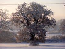vinter för designbildtree Arkivfoto