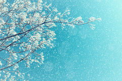 vinter för designbildtree Snöig trädfilialer för vinter mot solig himmel Vinternaturbakgrund med utrymme för text Royaltyfri Bild