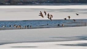 vinter för fiskeislake royaltyfri foto