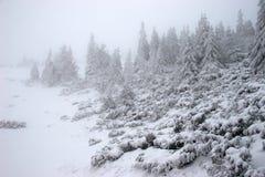 vinter för granskogsnowstorm Royaltyfri Bild