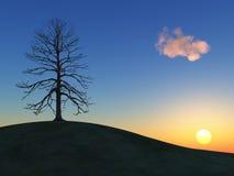 vinter för kullsolnedgångtree Royaltyfri Bild