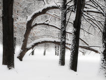 vinter för moscow parksnow Royaltyfria Foton