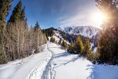 vinter för mulen sky för landskap för skogberg snöig Royaltyfri Foto
