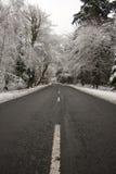 vinter för ny plats för skog snöig Arkivbild