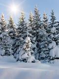 vinter för pälstreetrees Royaltyfria Bilder