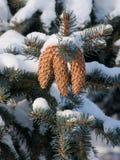 vinter för pälstreetrees Royaltyfri Fotografi