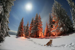 vinter för saga för snow för härlig skog röd s för stuga finlandssvensk Arkivfoto