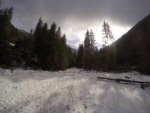 vinter för sikt för tree för filialgransnow arkivbild