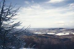 vinter för sikt för tree för filialgransnow Arkivfoton