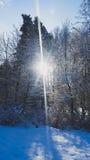 vinter för sikt för tree för filialgransnow Fotografering för Bildbyråer