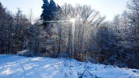 vinter för sikt för tree för filialgransnow Arkivfoto