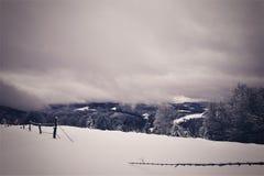vinter för sikt för tree för filialgransnow arkivbilder