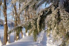 vinter för skog s fotografering för bildbyråer