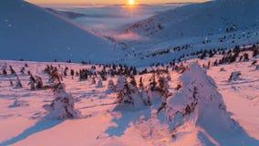 vinter för skogliggandesnow kullar med många sörjer träd som täckas av snö arkivfilmer