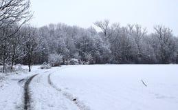 vinter för skognatursun royaltyfria foton