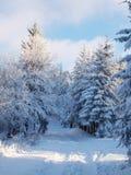 vinter för skognatursun royaltyfri fotografi